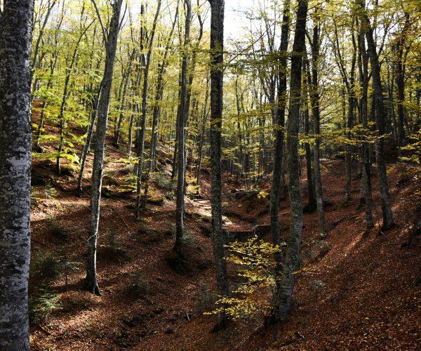 Forest places - Montagne Fiorentine jpg