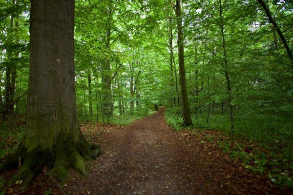 Model Forest Czech Republic