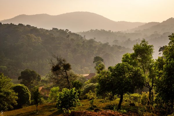 View of Coorg forest - Kodagu Model Forest