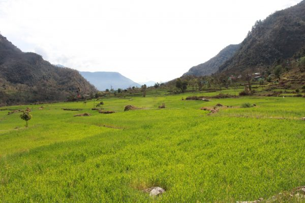 Agriculture Fields in BMF@Vipul Sharma